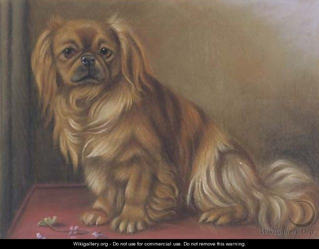 A pekingese on a table - English School