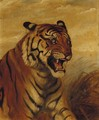 Snarling Tiger - English School