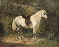 A Dappled Grey Pony - Emil Adam