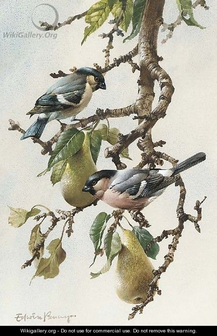 Bullfinches in a pear tree - Edward Penny