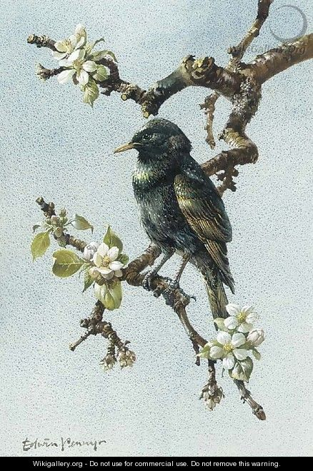 A starling - Edward Penny