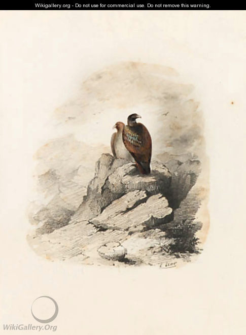 A pair of birds of prey on a rocky outcrop - Edward Lear