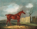 A chestnut Hunter by a Fence in an extensive Landscape - Edwin Cooper