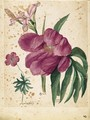 A Sheet Of Studies Of Flowers A Peony, A Spanish Iris And A Wild Geranium - Jacques (de Morgues) Le Moyne