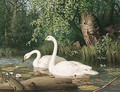 Whooper Swans On A Lake - Ferdinand Von Wright