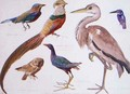 Studies of Birds from the Bootle Museum, Liverpool - Florence Emily Bark
