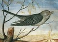 A Cuckoo perched on a Branch - Carlo Battaglia