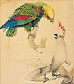 A Parrot And A Cockatoo - Sarah Stone