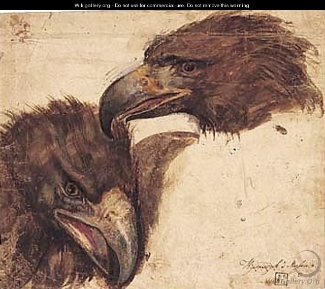 Two Studies Of The Head Of An Eagle - Giovanni (Giovanni da Udine) Nanni (Nani)