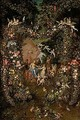 The crowning of cybele set within a garland of flowers, fruit and vegetables - Jan, the Younger Brueghel