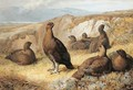Grouse On The Moor - Archibald Thorburn