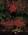 Red currants - Levi Wells Prentice