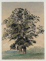 Study Of A Tree In Blenheim Park - William (Turner of Oxford) Turner