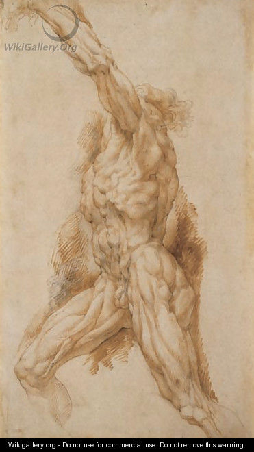 Anatomical Study of a Man Reaching Up to the Left - Peter Paul Rubens