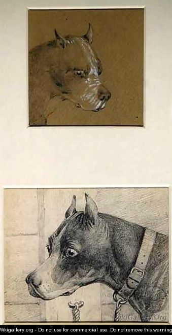 Head and shoulders of a boxer dog - Henry Thomas Alken