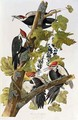 Dryocopus pileatus (Pileated Woodpecker) one adult male and female with two young males - (after) Audubon, John James