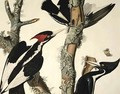 Ivory-billed Woodpecker, from