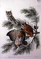 Little Screech Owl, from 'Birds of America' - (after) Audubon, John James