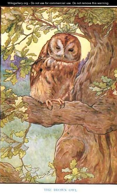 The Brown Owl, illustration from