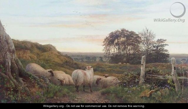 Evening Landscape With Sheep At Rest - George Shalders