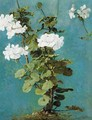 A Study Of A White Geranium - French School