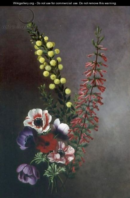 A Study Of Anemones,veronica And Other Flowers - Antoine Chazal