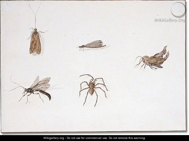 Insects - Pieter Withoos