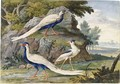 Two Silver Pheasants And A Black-Crowned Night Heron In A Landscape - Willem Frederik van Royen