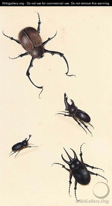 A Rhinoceros Beetle And Three Other Beetles - Dutch School