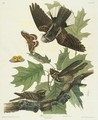 Whip-Poor-Will - John James Audubon