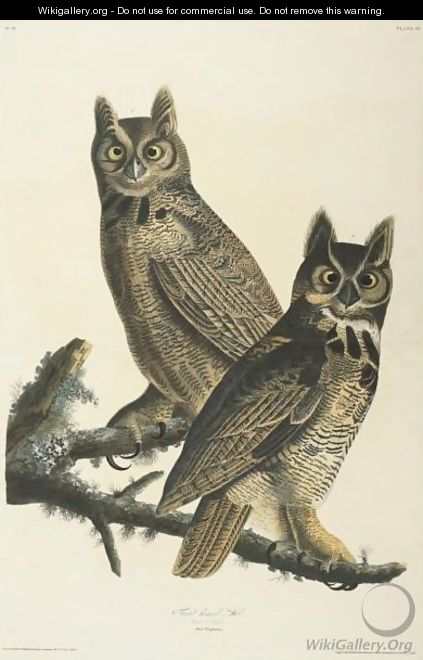 Great Horned Owl (Plate 61) - John James Audubon