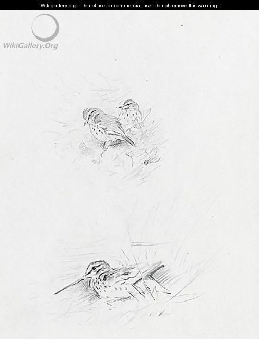 Snipe And Redwing - Archibald Thorburn