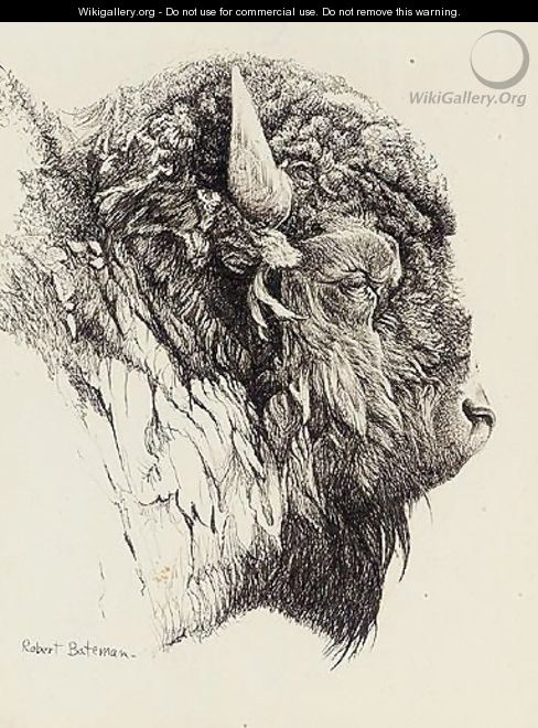 Bison Head - Robert Bateman