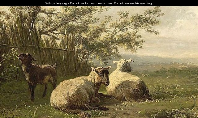Schapen - Jan Bedijs Tom