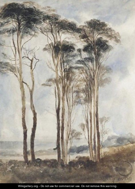 Scots Pines - Andrew Nicholl