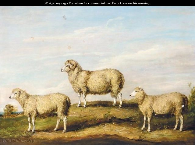 A Dartmoor Ram, Ewe And Wether - James Ward