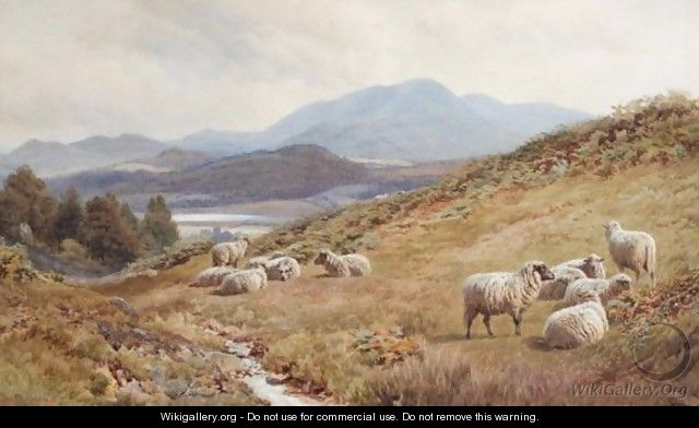 Sheep On The Fells - Frederick John Williamson
