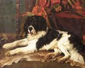 The St Bernard - Wright Barker