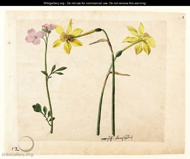 A Sheet Of Studies Of Flowers Two Narcissi And A Lady