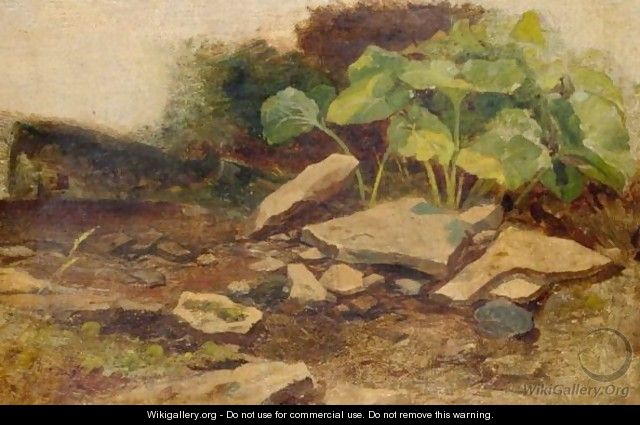 Study Of Plants And Rocks - William James Muller