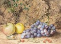 Still Life Of Apples And Grapes - Thomas Collier