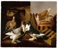 Still Life Of Two Courting Doves, A Partridge And Her Chicks, And A Further Dove Beyond Perched On A Jar - Jacomo (or Victor, Jacobus) Victors