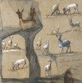 A Sheet Of Studies Of Deer - Claude Lorrain (Gellee)