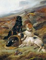 The Highland Trio, English And Gordon Setters - John Gifford