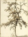 Study Of A Tree - Dutch School