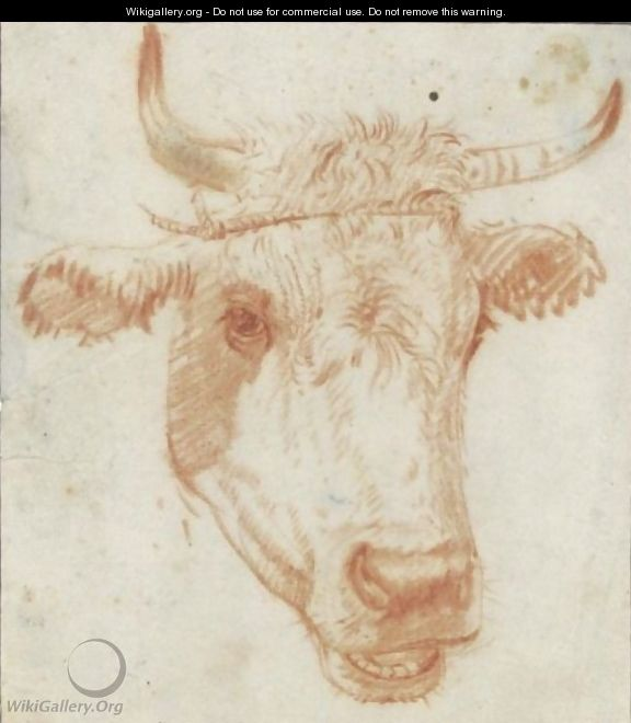 Study Of The Head Of A Cow - (after) Karel Dujardin