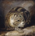 A Wild Cat - (after) James Northcote