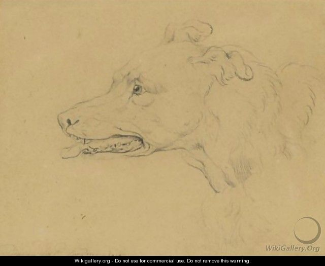 Study Of The Head Of A Greyhound - Sir Edwin Henry Landseer