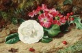 A Camelia On A Mossy Bank - (after) George Clare
