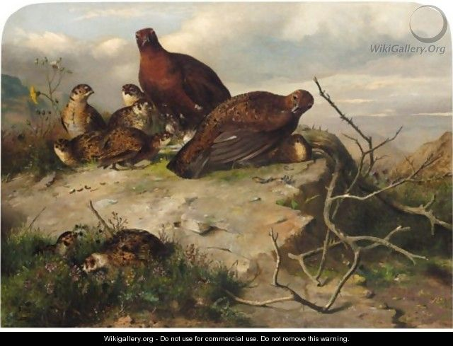 A Pair Of Red Grouse And Chicks - John Clement Bell
